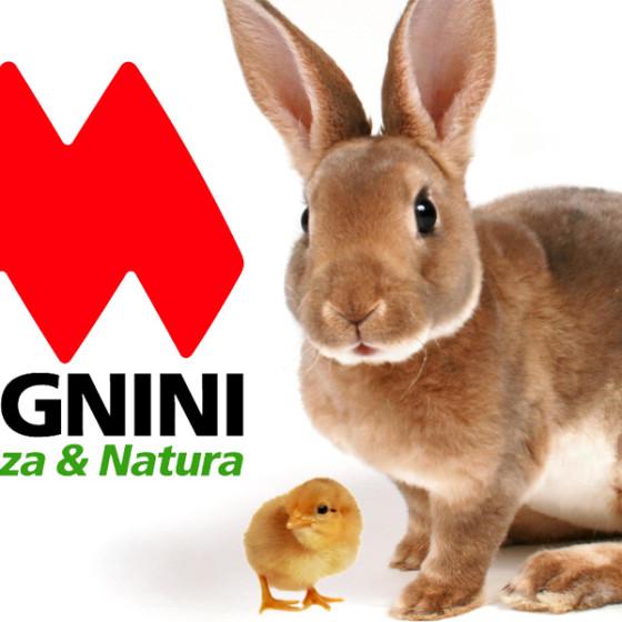 allevare pulcini e conigli