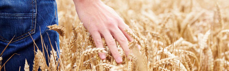 trading-cereali-serena&manente