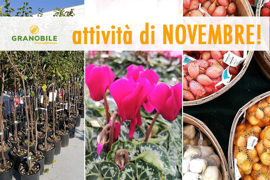 attività in giardino e orto a novembre